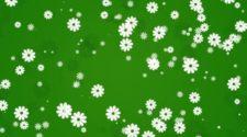 Mouvement vert